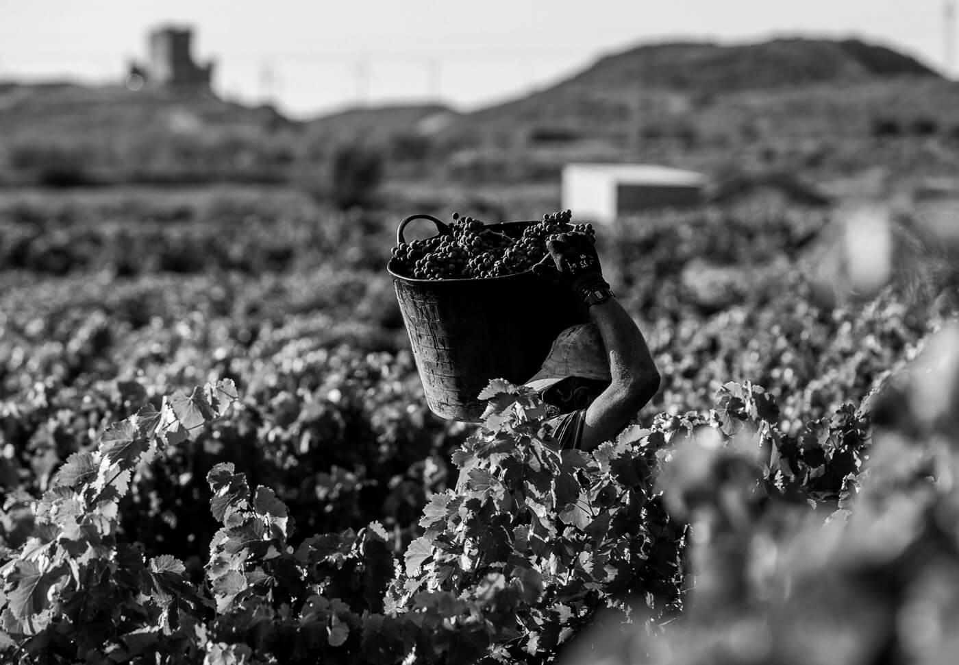 Historia del vino en Quel