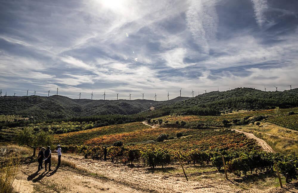 Tempranillo: Un poco de historia en la evolución del vino de Rioja